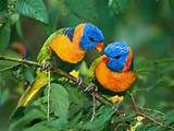 008 - La comunicación entre las aves es variable y puede implicar señales visuales, llamadas y cantos. Algunas emiten gran diversidad de sonidos, y se destacan por su inteligencia y por la capacidad de transmisión cultural de conocimientos a nuevas generaciones.