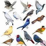 004 - Su posterior evolución dio lugar, tras una fuerte radiación, a las más de 10 000 especies actuales (la última lista de Clements incluye 10 157 especies vivas más 153 extintas en tiempos históricos).