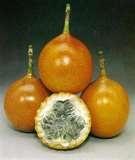 31 – Granadilla, Fruta peruana que dicen representa la pasión de Cristo, los primeros españoles que llegaron en el siglo XVI, le dieron este nombre de la fruta de la pasión.