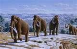 14 - A esta época, también se le denomina la Edad de Hielo, por el profundo descenso de la temperatura en la tierra. Grandes glaciares empujan a los bosques y sus habitantes mas al sur.