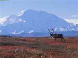 15 - Mientras que la tundra y la estepa se extienden entre los glaciares y el bosque. Se modifican las costumbres alimenticias según las nuevas condiciones climáticas de cada región.