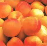 17 ALBARICOQUES - Su fruto es el albaricoque (damasco, chabacano, albérchigo, abercoque, albarillo, aprisco o alberge), una drupa casi redonda y con un surco, por lo común amarillenta a naranja aunque a veces con tiras rojas en parte encarnada, aterciopelada, de sabor agradable y con hueso liso de almendra generalmente amarga. Es un fruto parecido al melocotón o durazno.